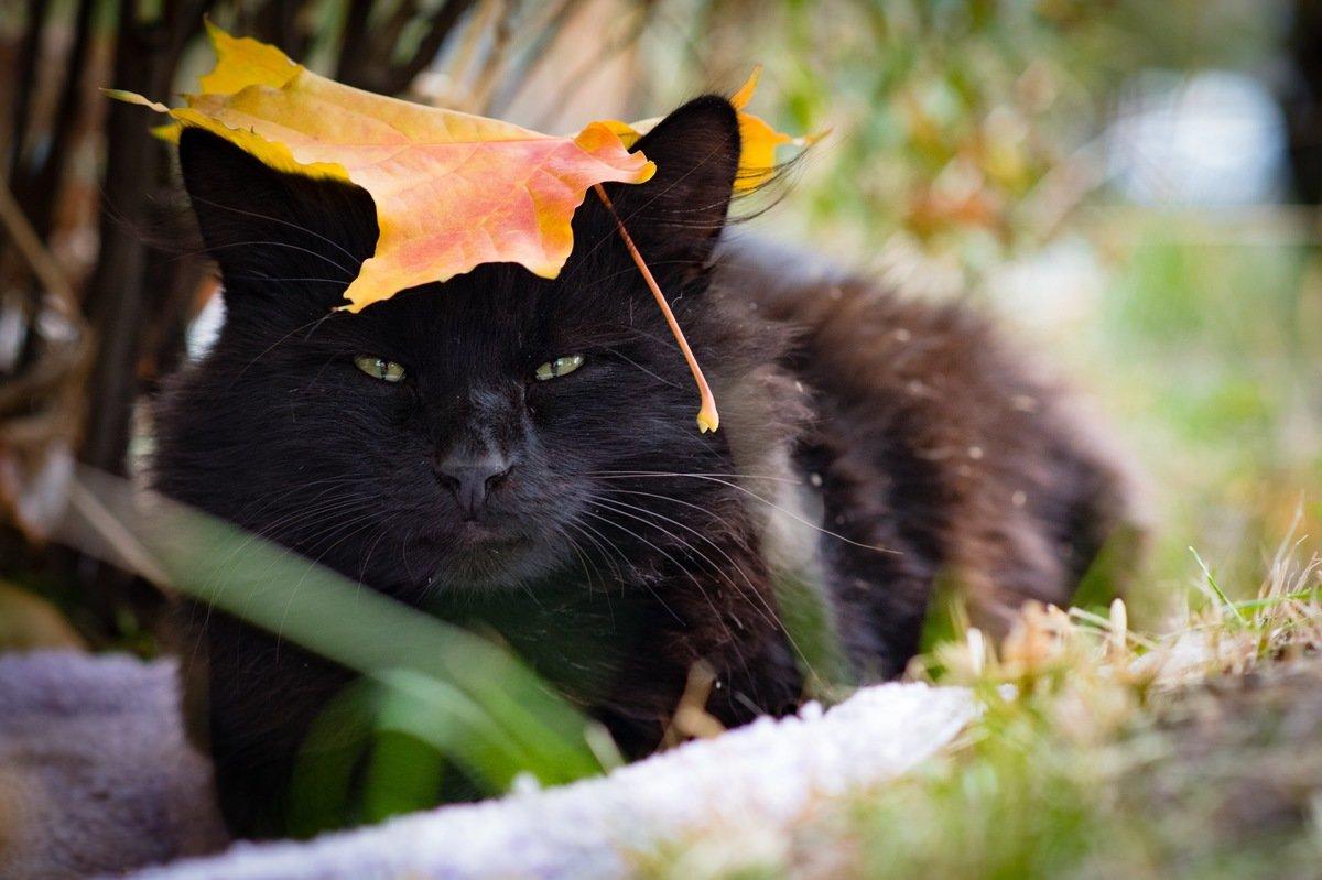 Осенний кот - Юрий Ричка