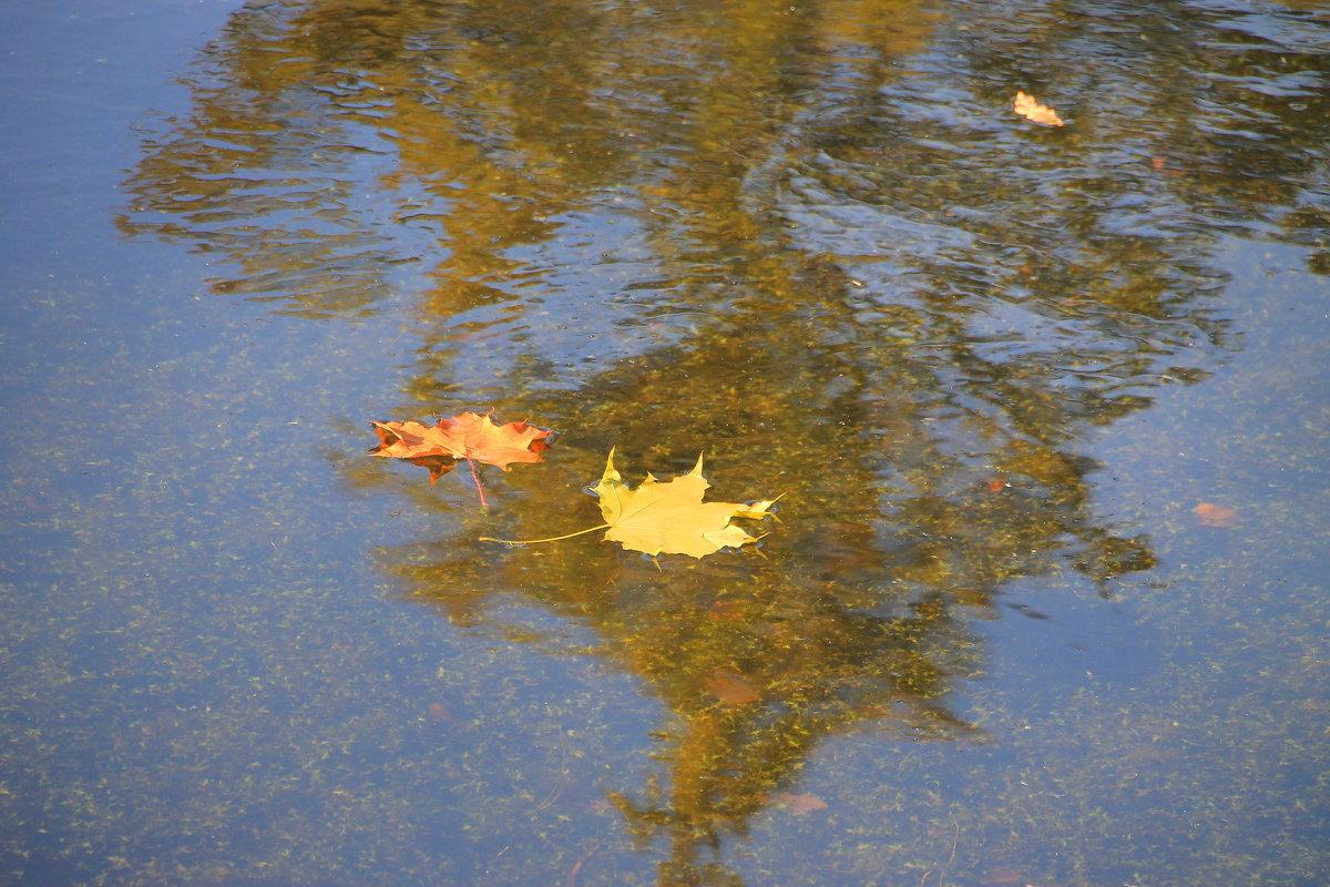 Осенняя регата.... - Tatiana Markova