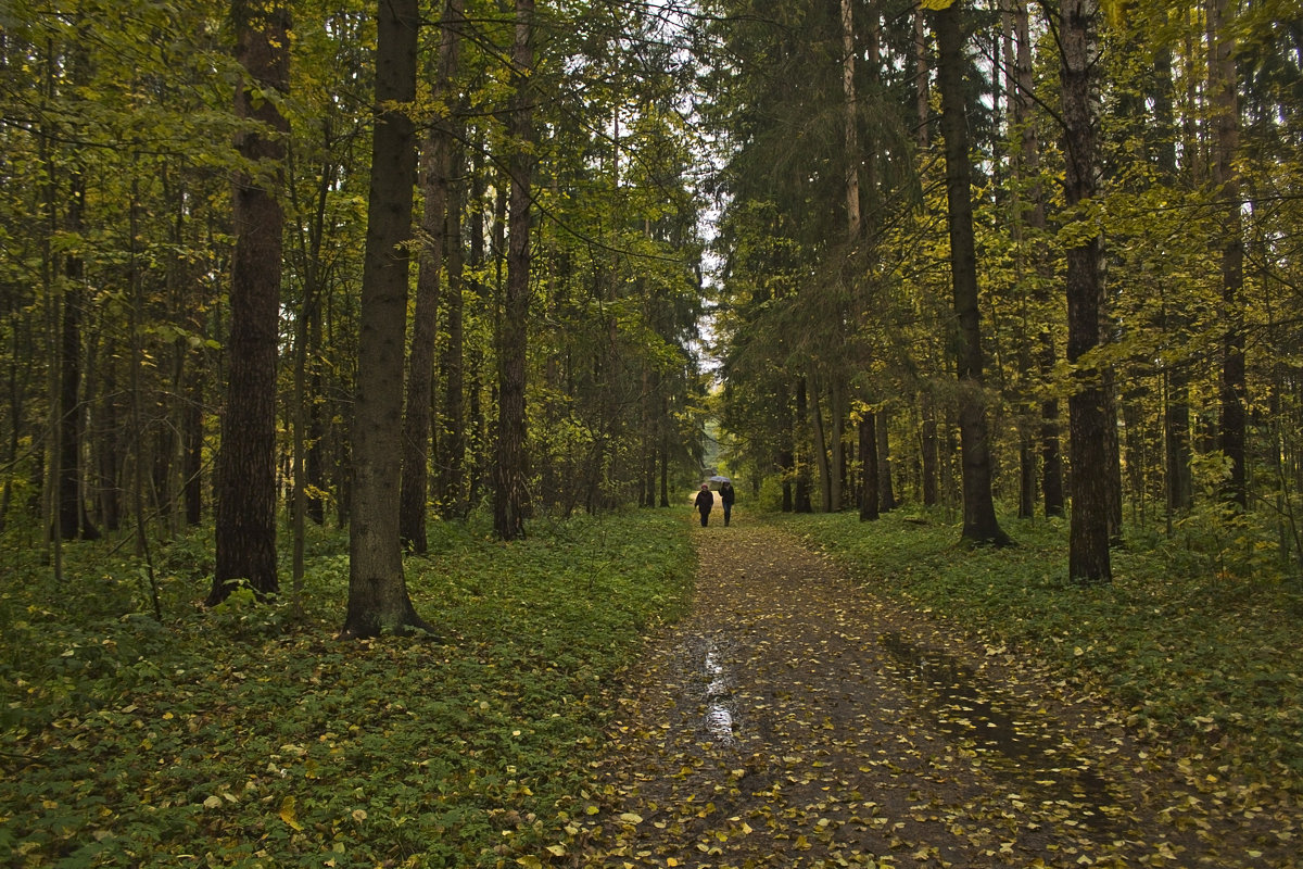 В сумраке осеннего парка. - Senior Веселков Петр