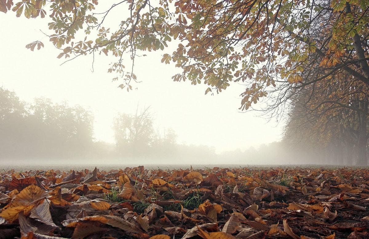 По туманному парку - Alexander Andronik