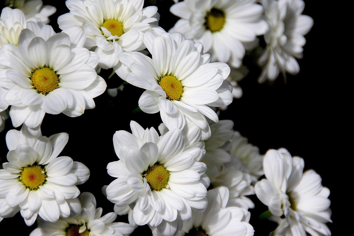 ЦВЕТЫ...  просто  цветы... - Валерия  Полещикова