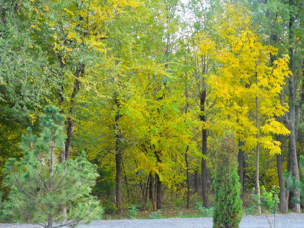 Природа в октябре... - Тамара (st.tamara)