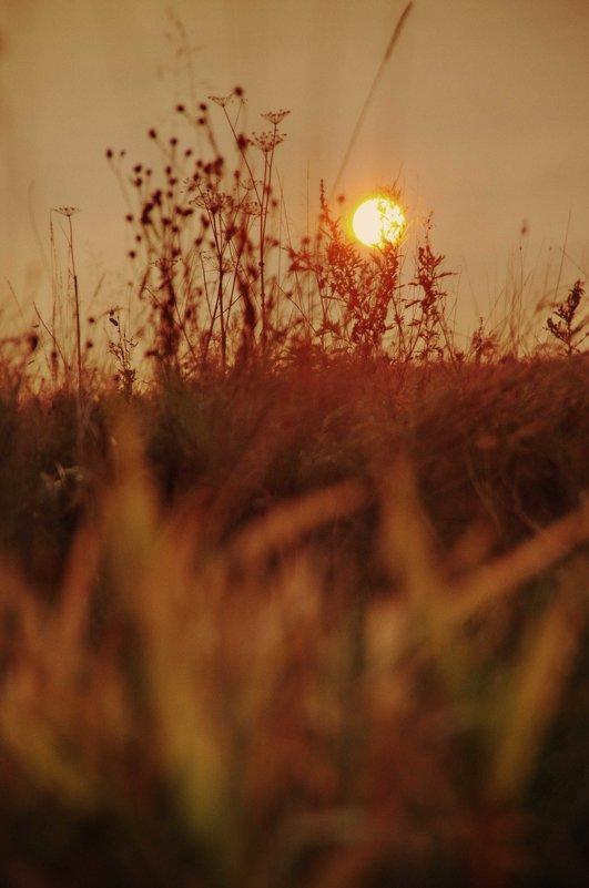 У осеннего солнышка тоже Свет ласкающий, тихий такой. - Ирэна Мазакина