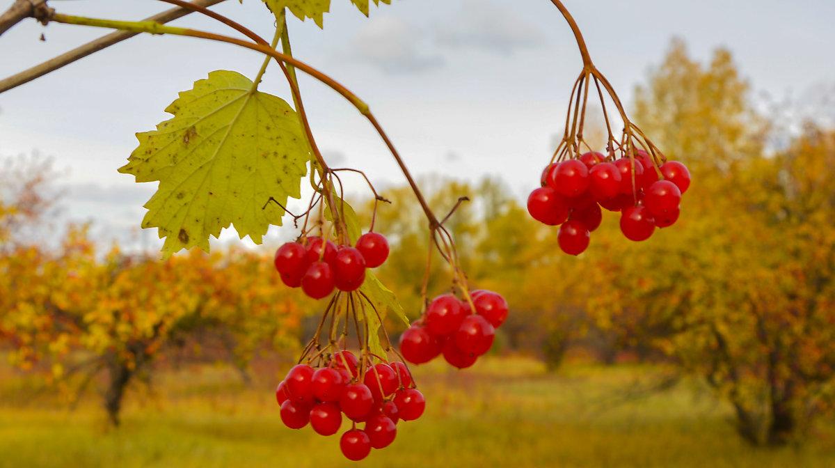 Осенние бусинки - юрий Амосов