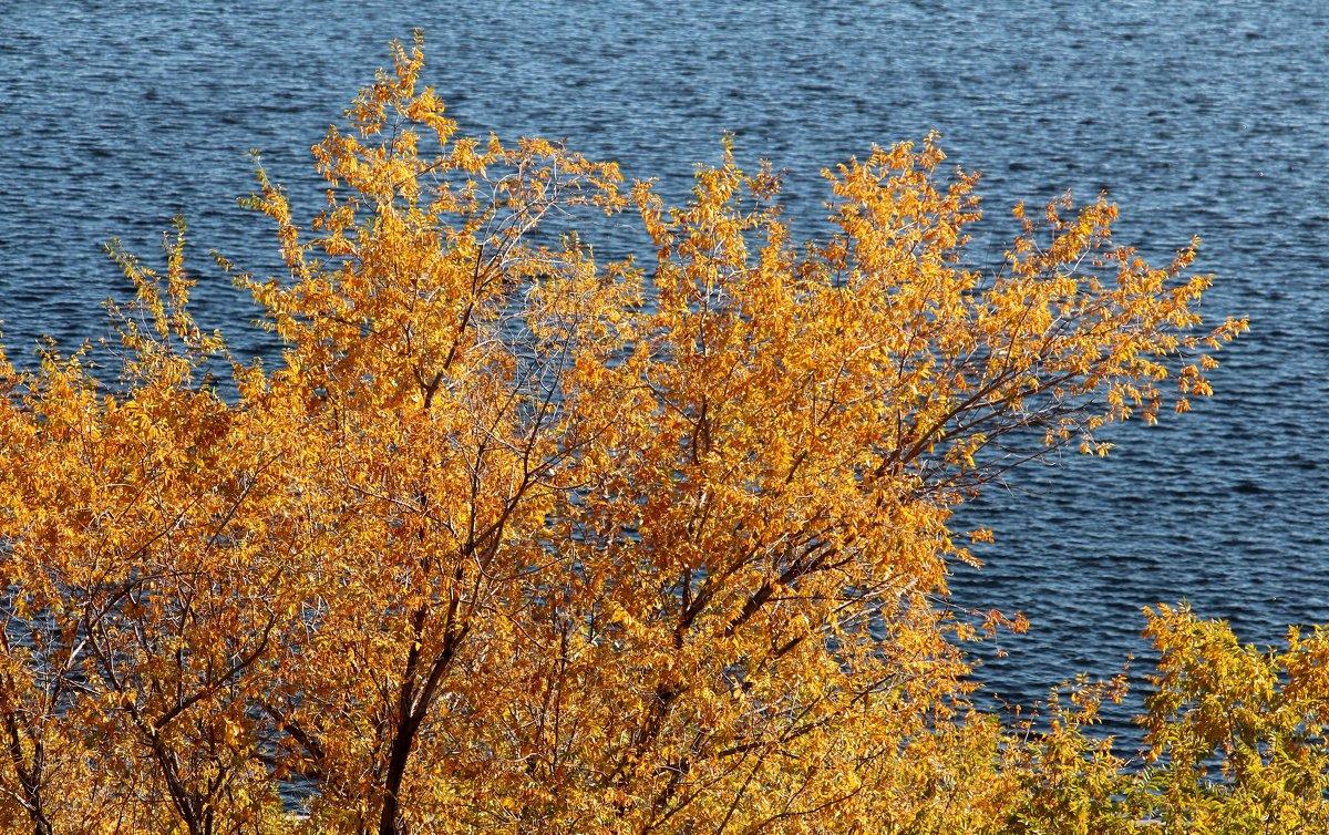 Осень на Волге - Dr. Olver ( ОлегЪ )