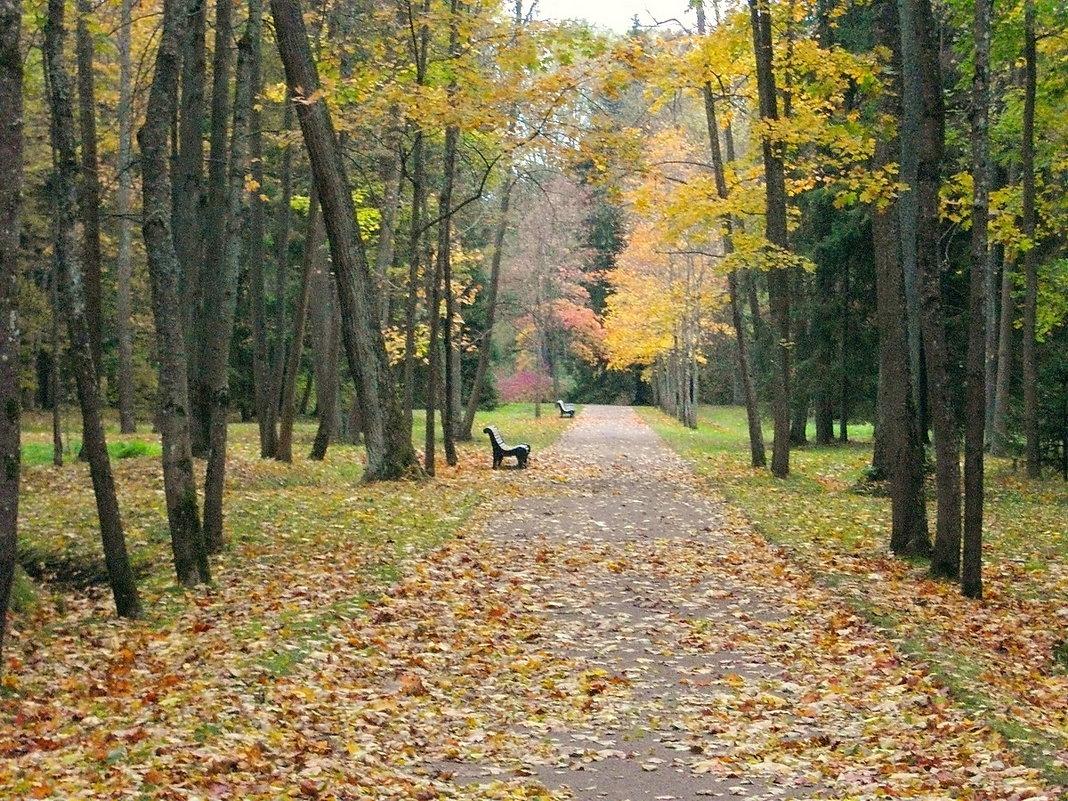 Осенняя аллея. - Лия ☼
