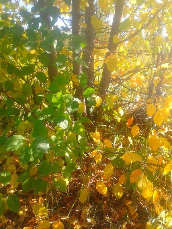 Желто- зеленая роскошь листвы - Kira Martin