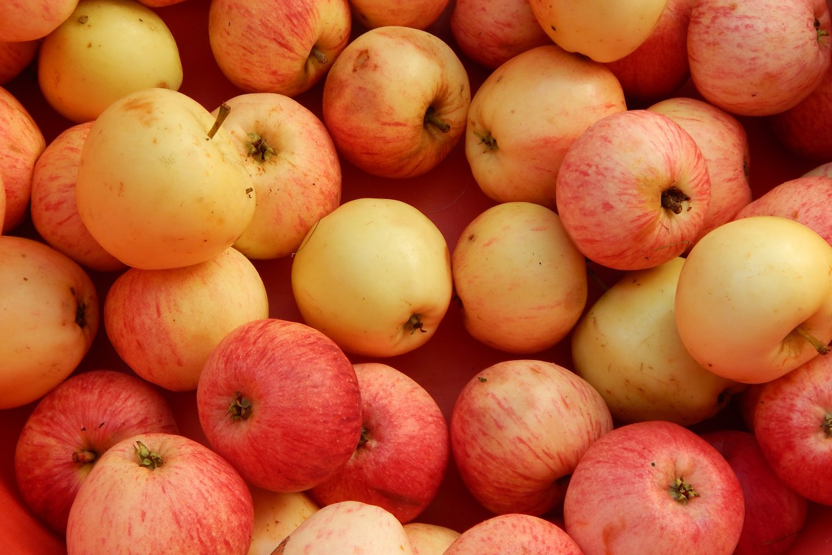яблоки - linnud