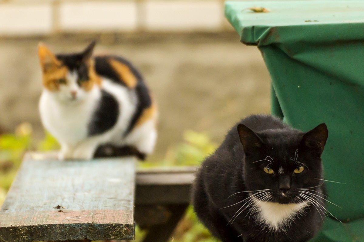 Коты и кошки - Александр