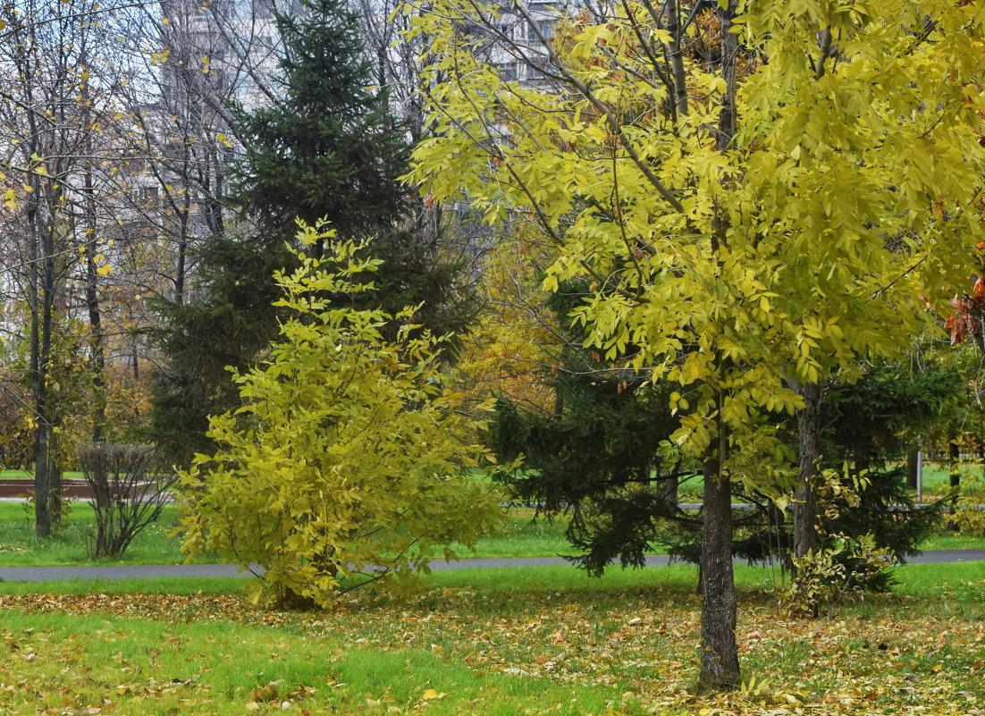 Зелёный уголок в осеннем парке. - Татьяна Помогалова