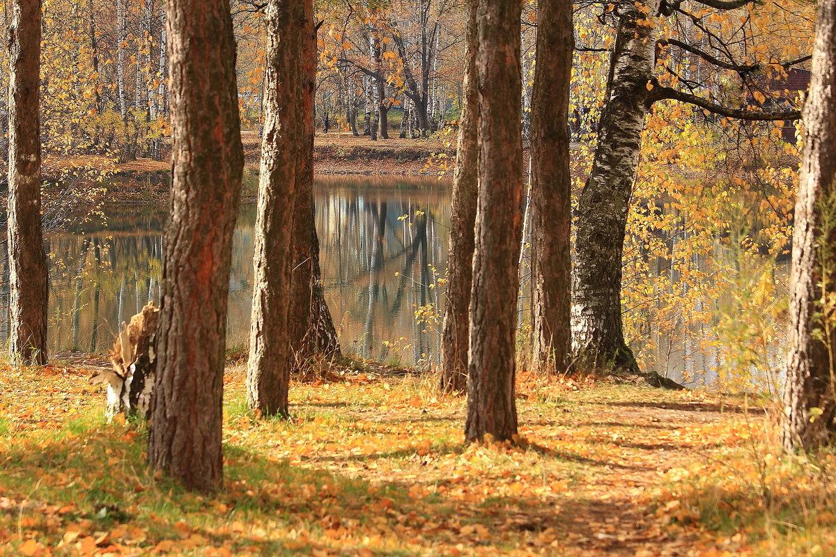У берез и сосен тихо бродит осень - Татьяна Ломтева