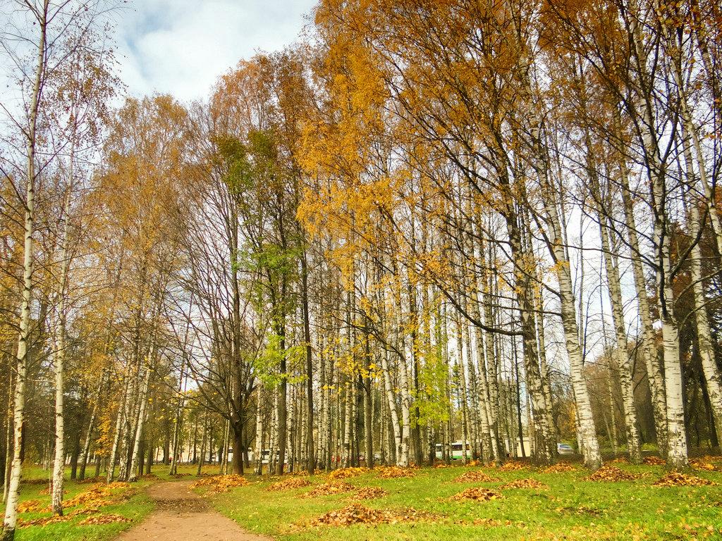 Осень в парке. - Алексей Цветков