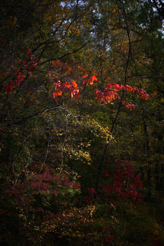 Осенние огоньки - Валерий Дворников