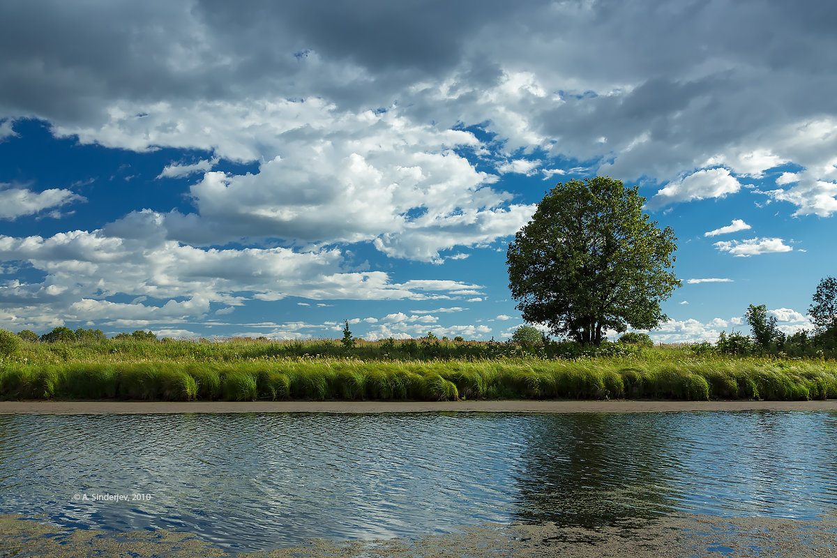 Одинокий дуб на берегу озера - Александр Синдерёв