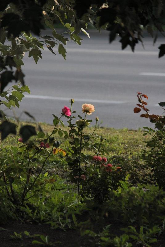 Городские цветы - Владимир Марков