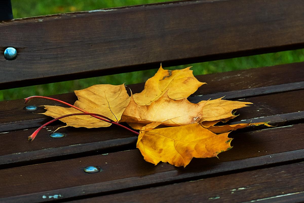 Осенней жёлтый лист..... - Сергей К.