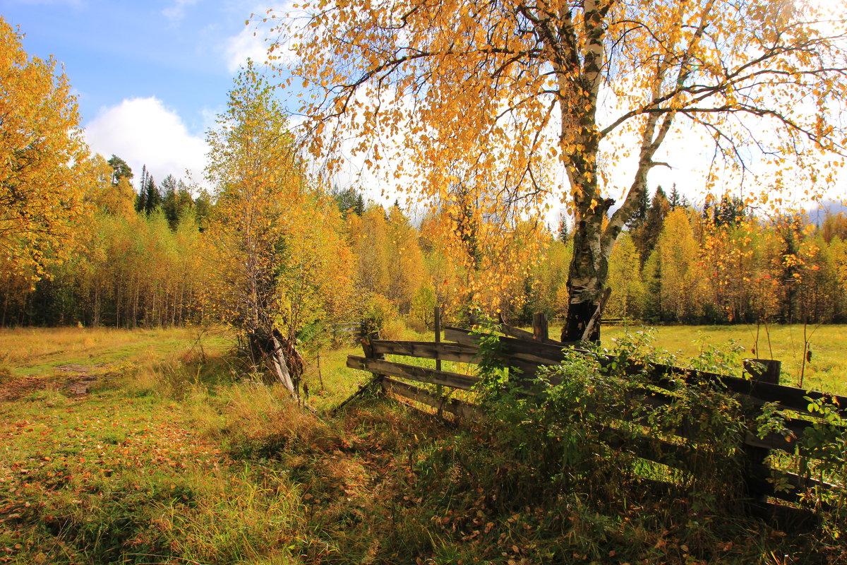 Осень в Перерве... - Александр Широнин