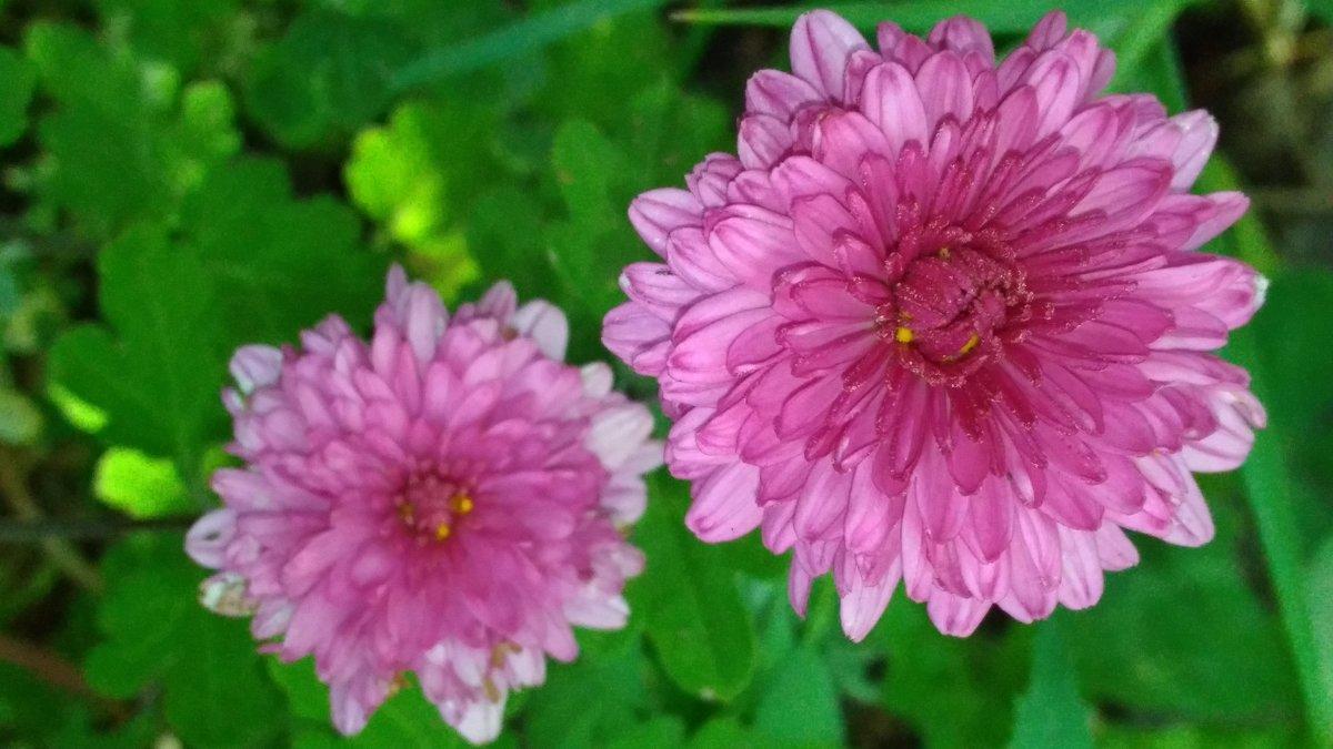 Садовые цветы! - Ueptkm