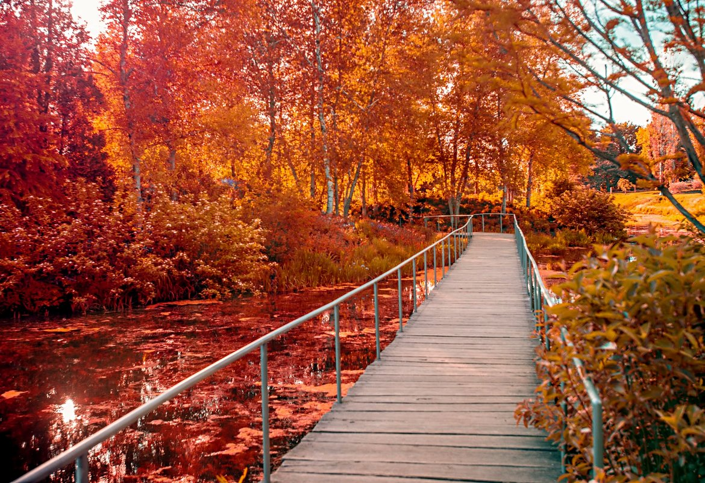 Осенний лес - Gene Brumer