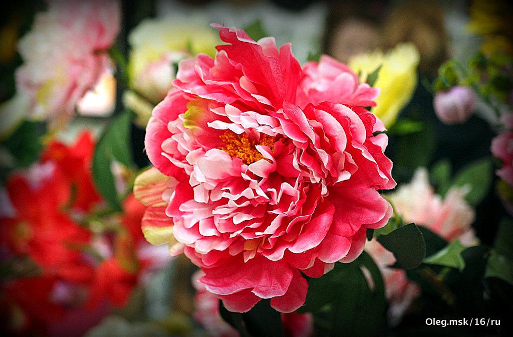 яркие цвета цветка - Олег Лукьянов