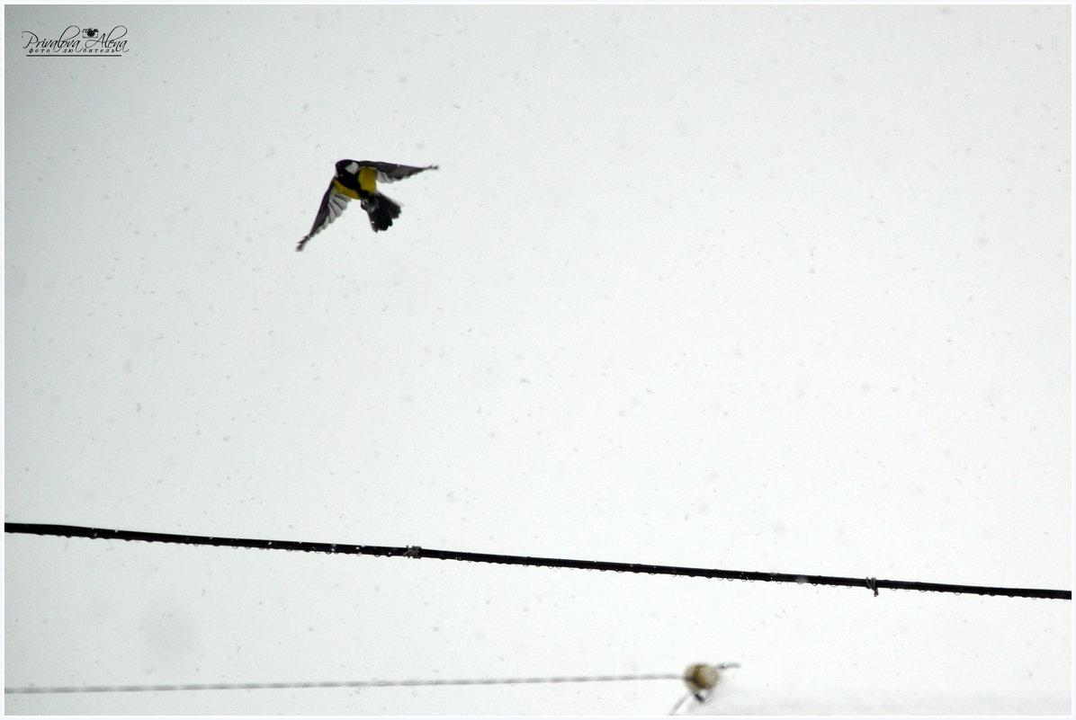 Синица летит на обед... - Алёна PRIVALOVA
