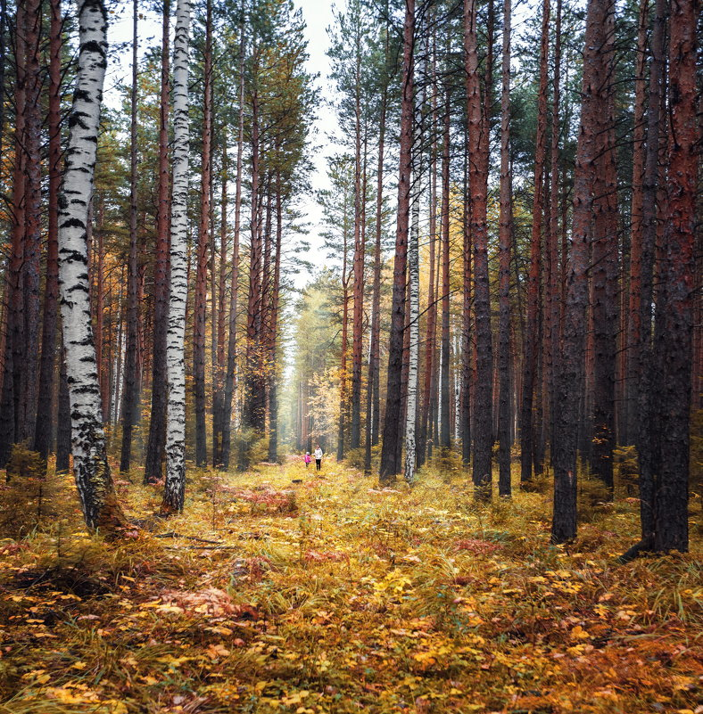 Осень в селе Петрокаменское - Георгий Бондаренко