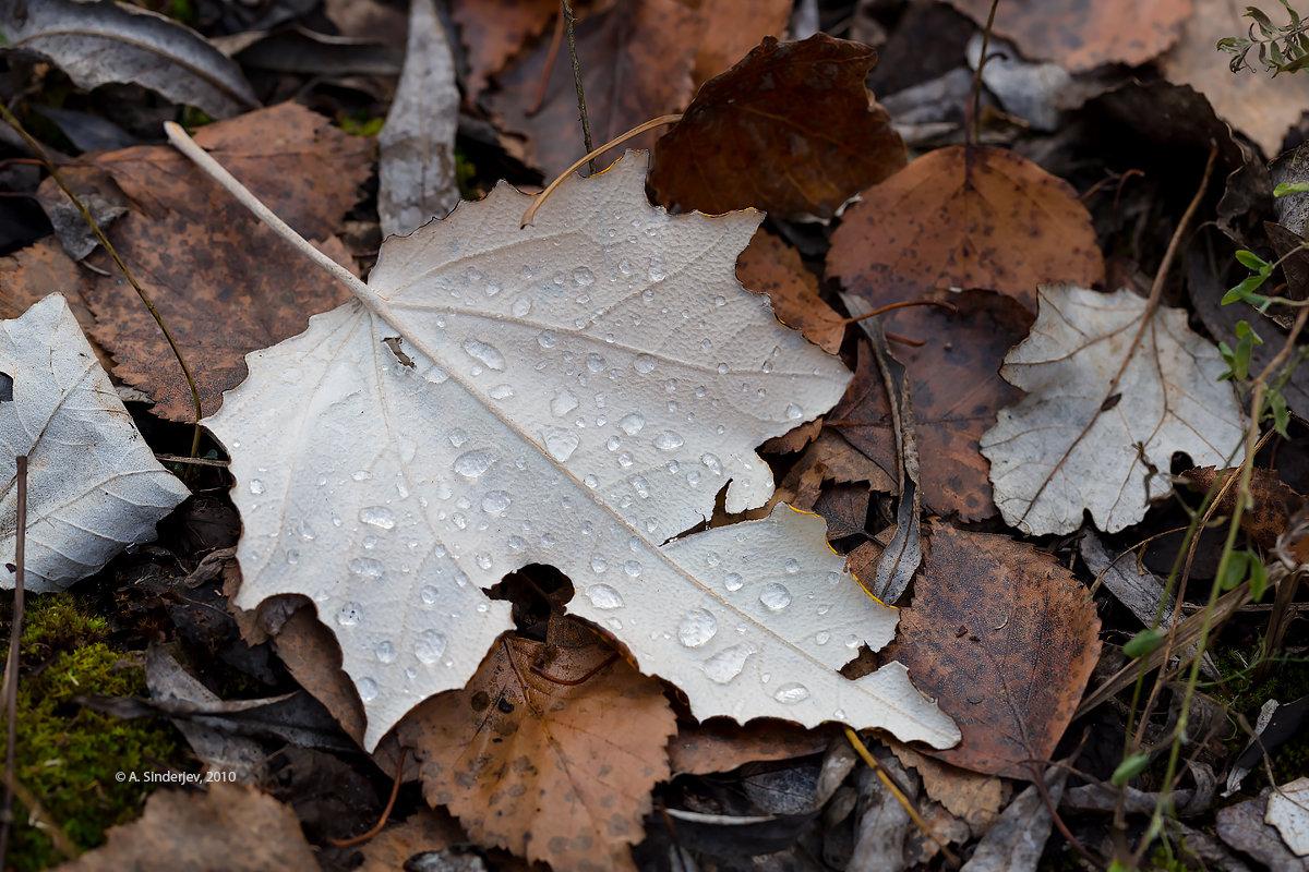 Осенний лист - Александр Синдерёв