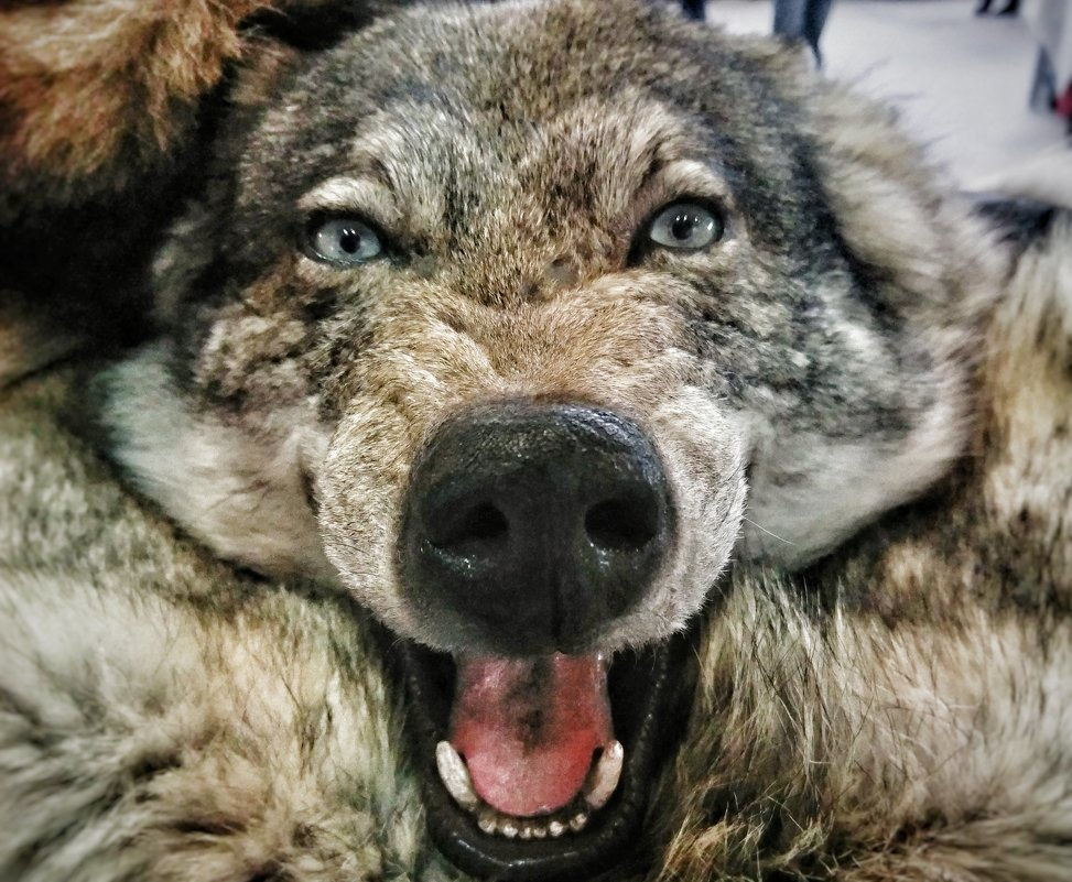 А Он был просто волк. - Андрей