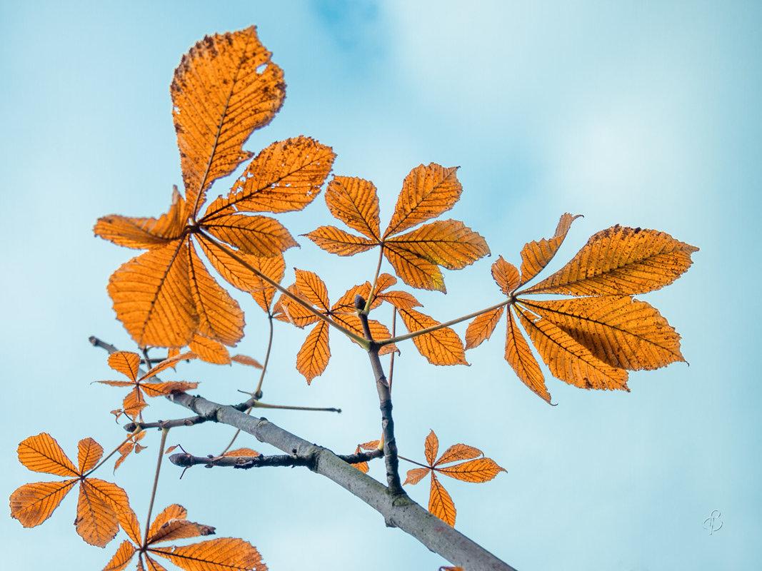 Листья осени - Виталий
