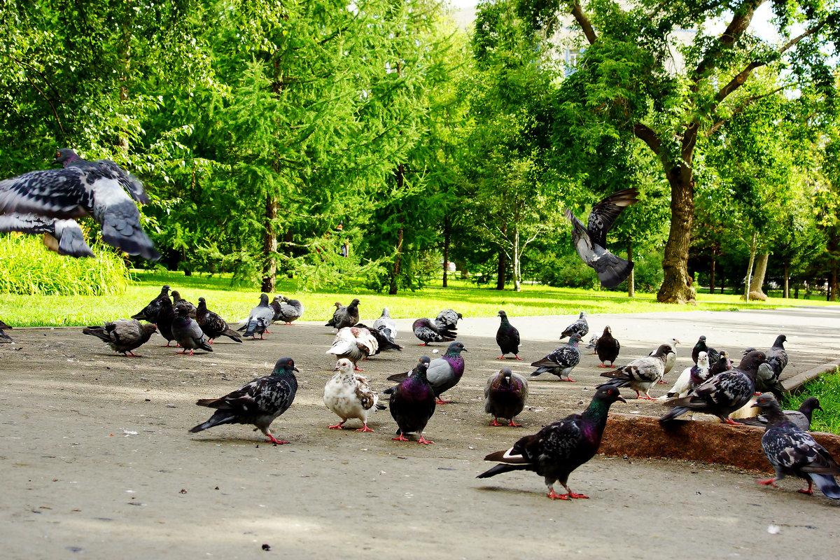 Городские голуби - Сергей Царёв