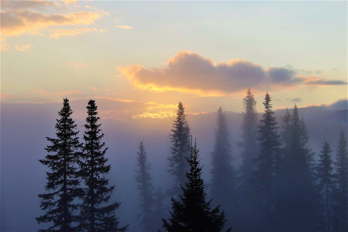 Туманное утро - Сергей Чиняев