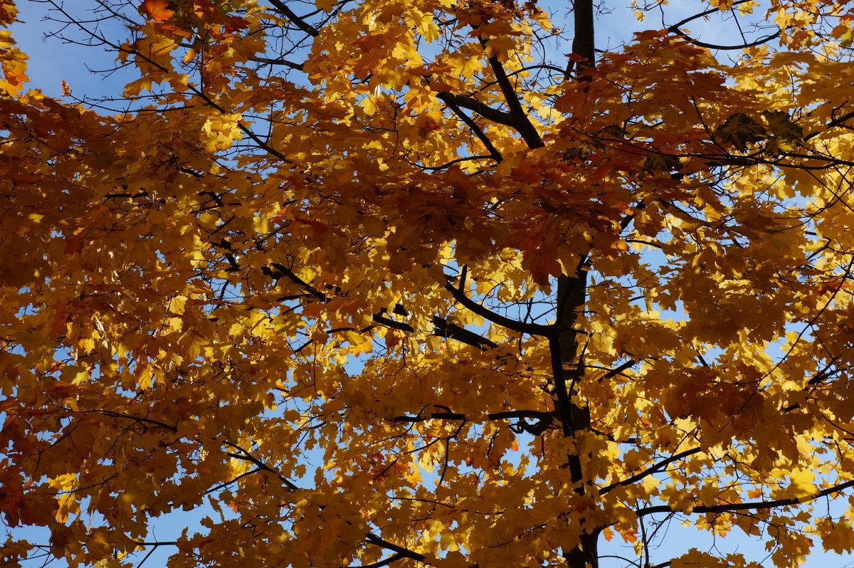 Осень золотая ... - Алёна Савина