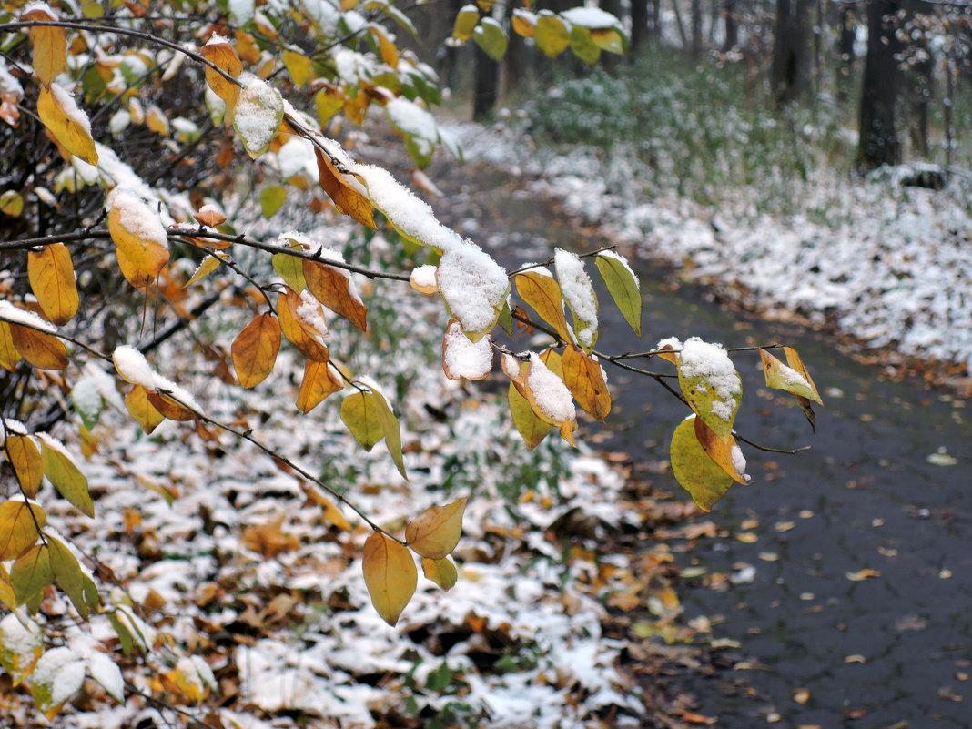 Первый снег - Денис Масленников