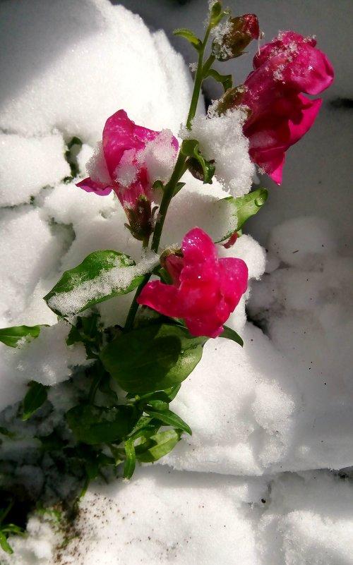 Цветок ноября - Ольга