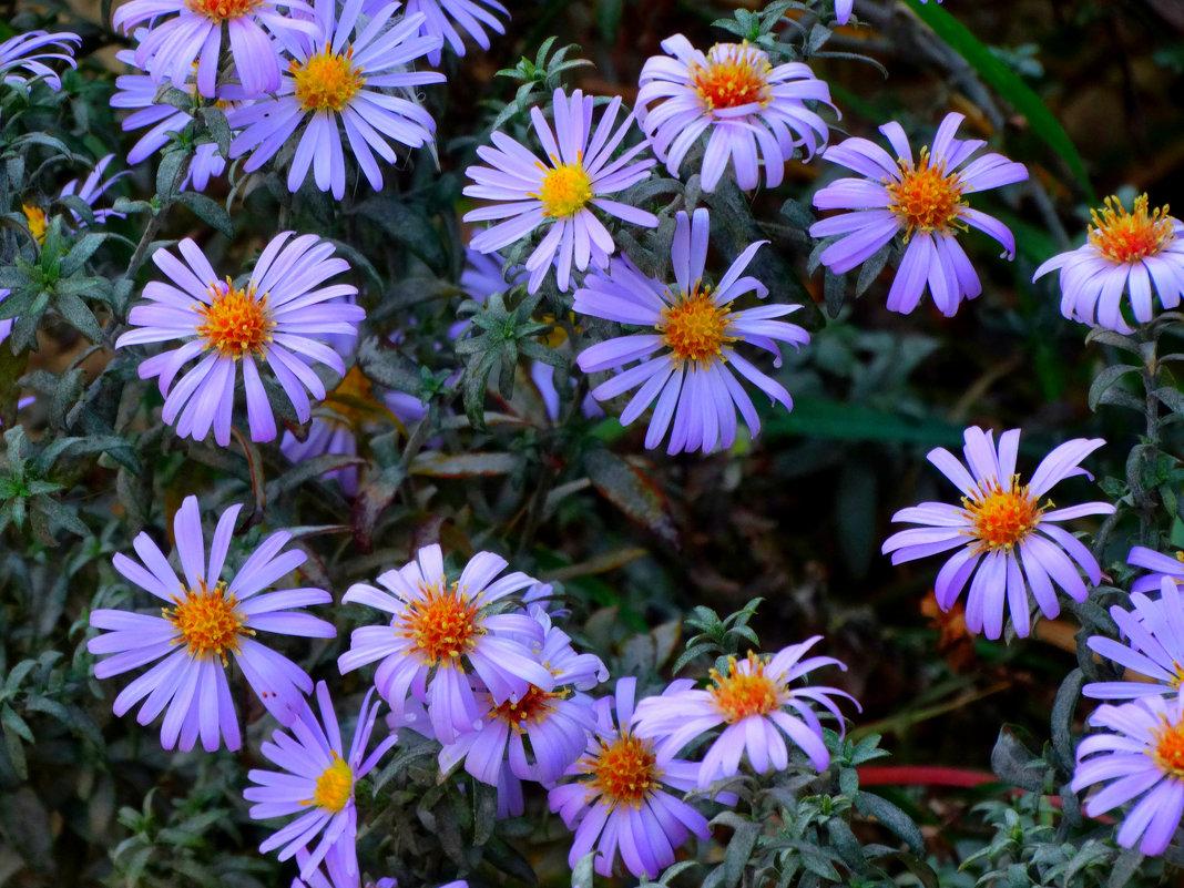 Цветы октября... - Тамара (st.tamara)