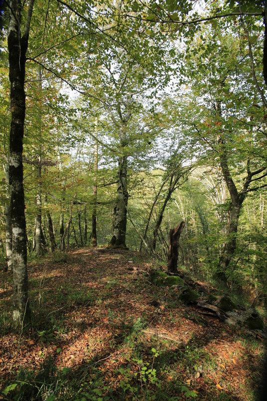 Осень в лесу - valeriy khlopunov