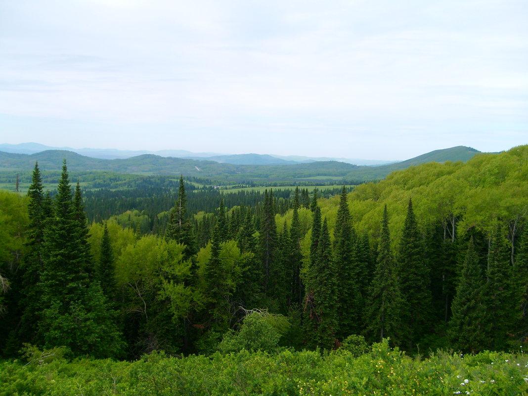 леса алтая - vladimir polovnikov