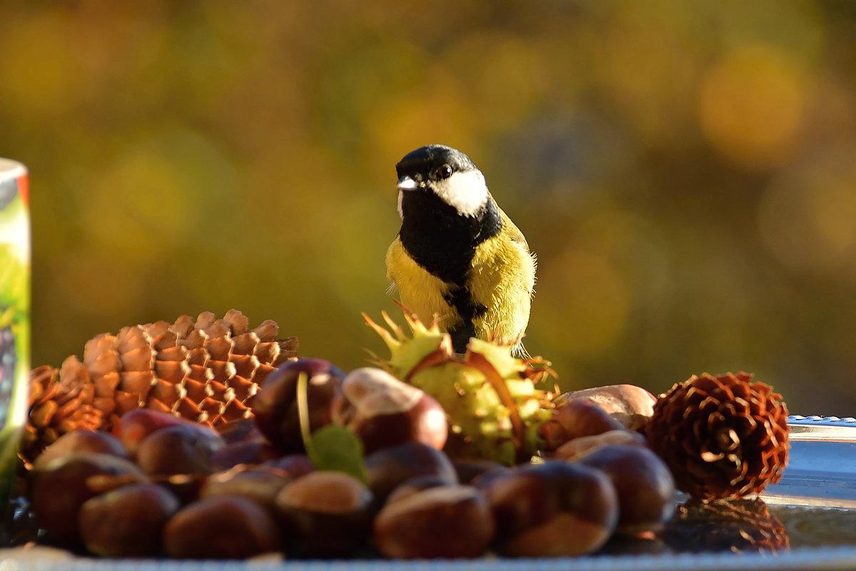 осень - linnud