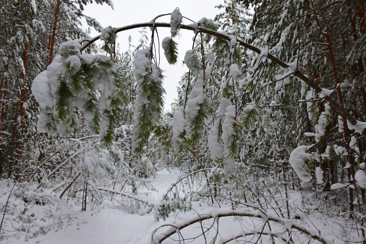 В зимнем лесу - Леонид Чащин