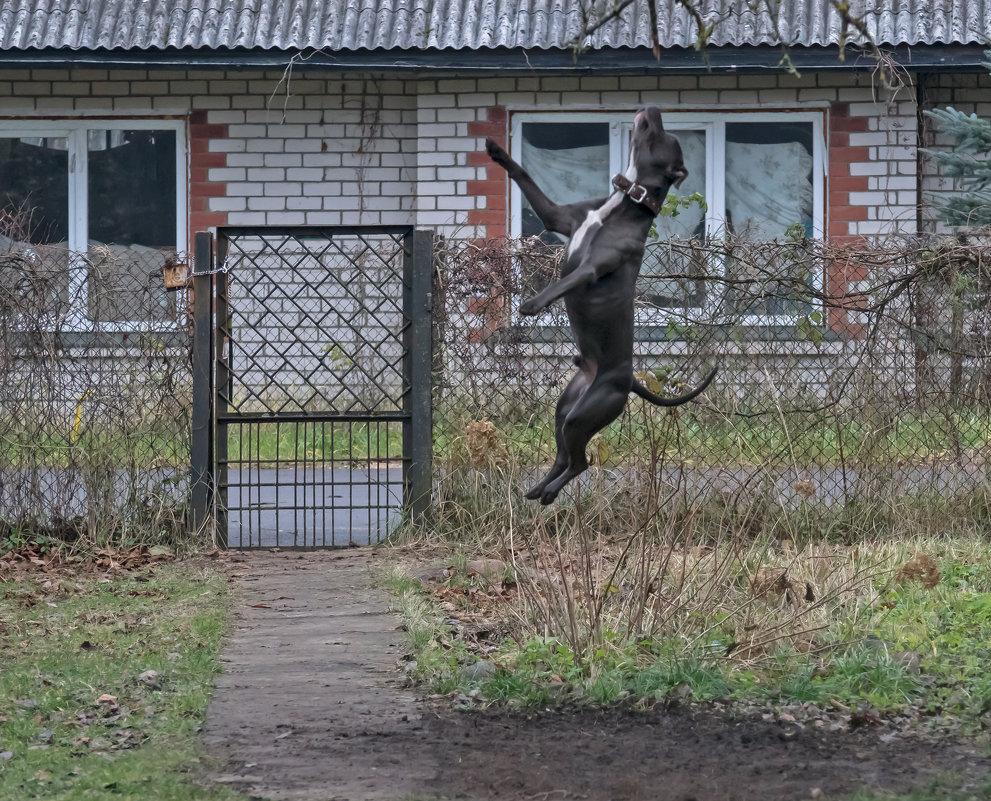 Прыжок - Viktor Makarov
