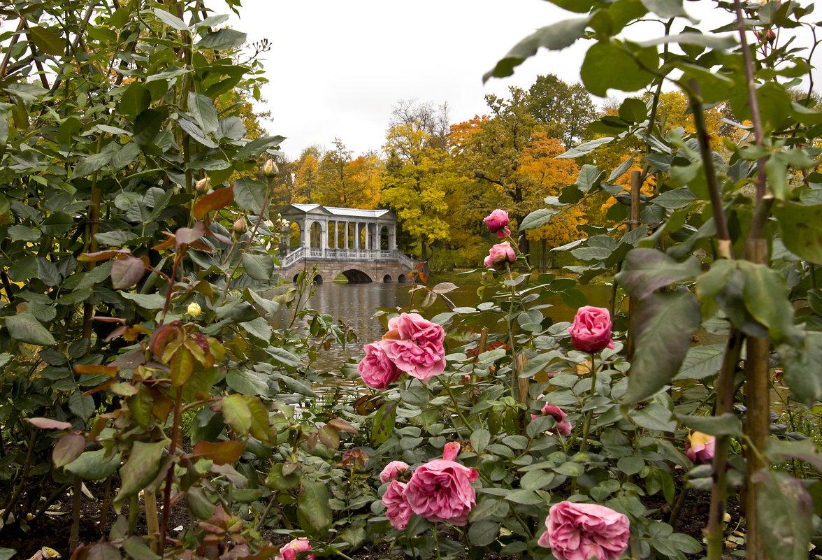 Розы в октябре - Татьяна Петранова