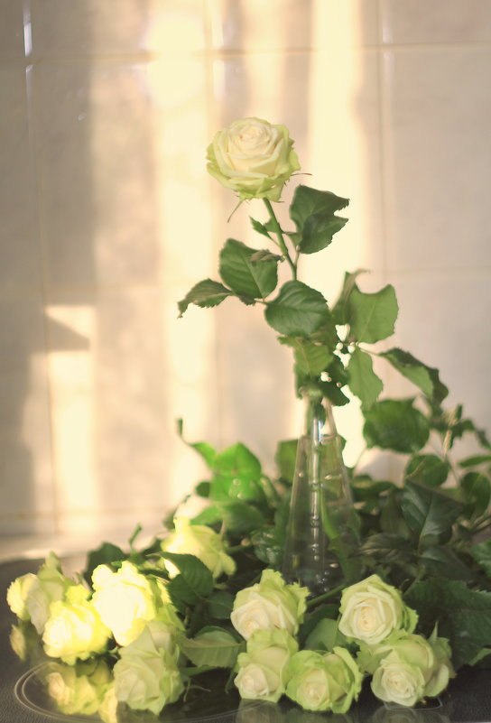 Нежные розы - ninell nikitina