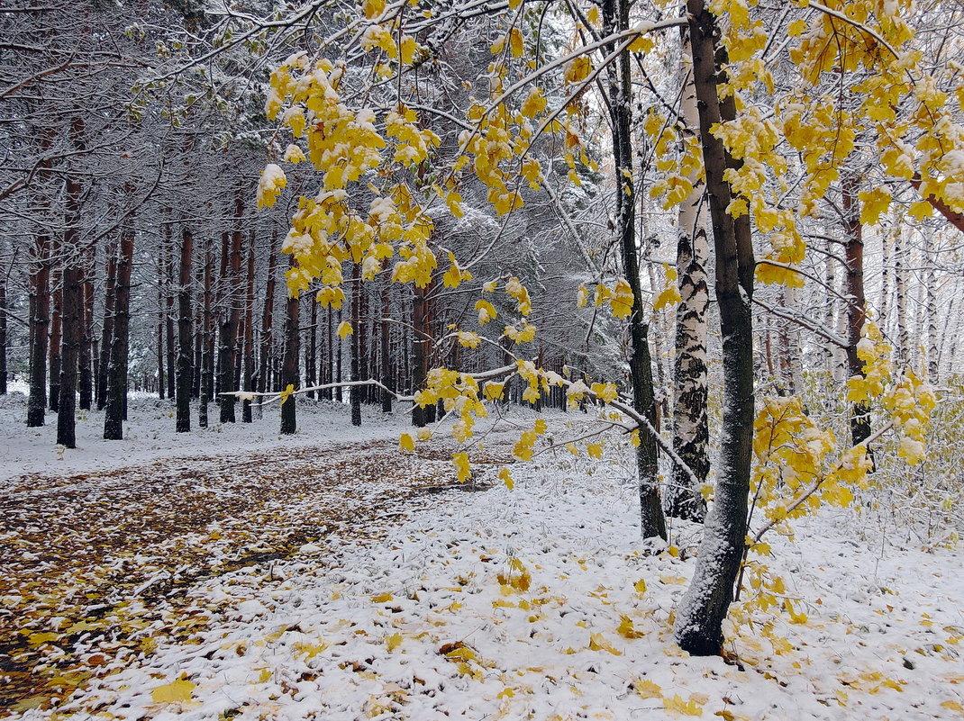 На берегу Волги, уже не осень, еще не зима - Николай Белавин