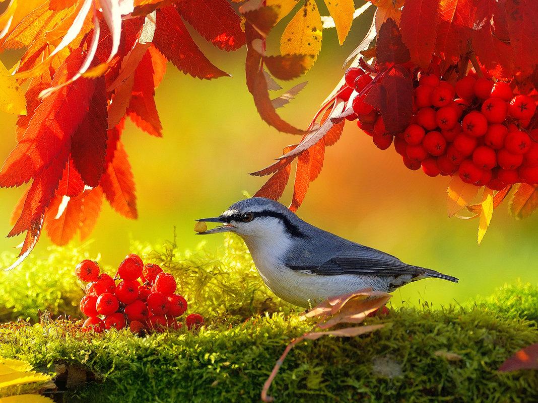 Осенние птицы. Поползень - Влад