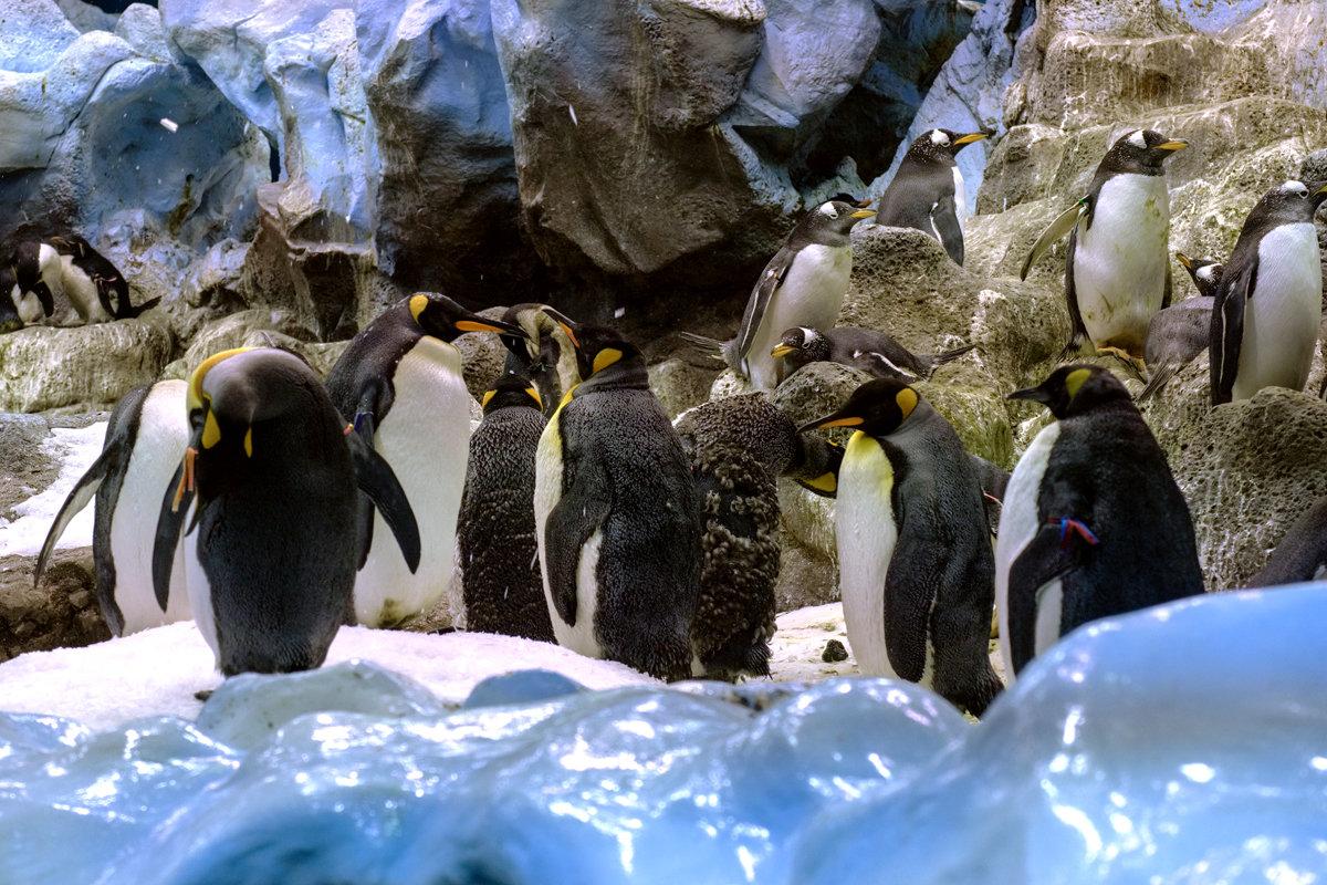Пингвины 1 - Андрей Бондаренко