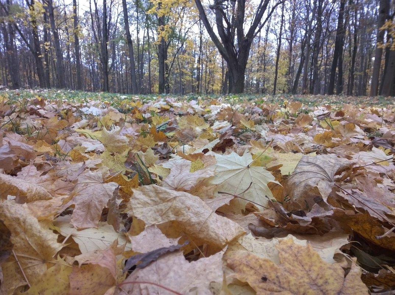 В осеннем лесу - Елена Иванкина