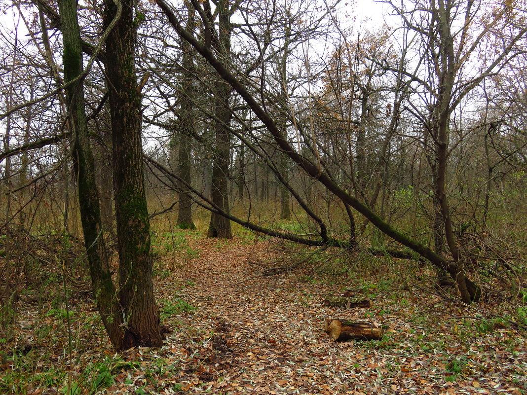 Мой парк в ноябре - Андрей Лукьянов