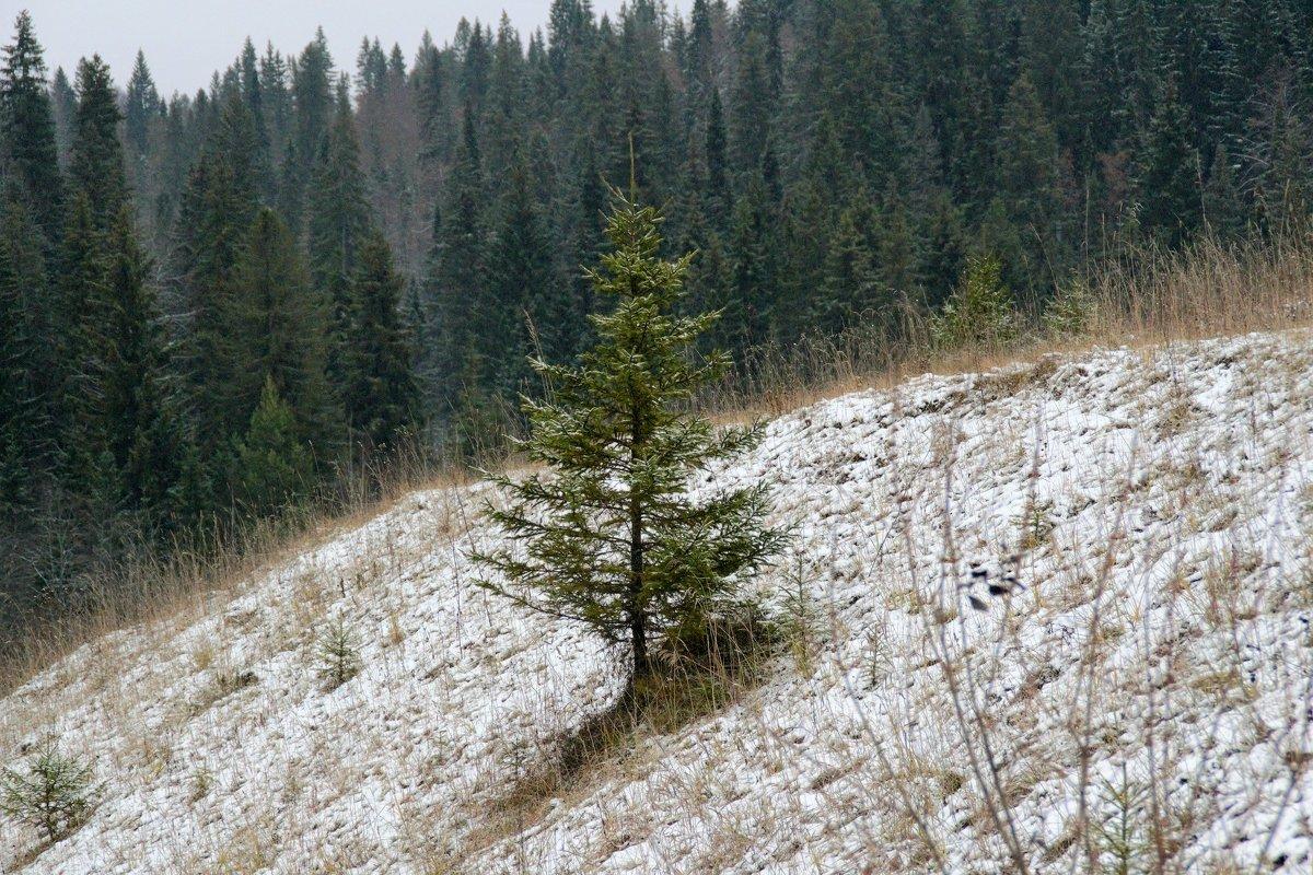 первый снег. - petyxov петухов