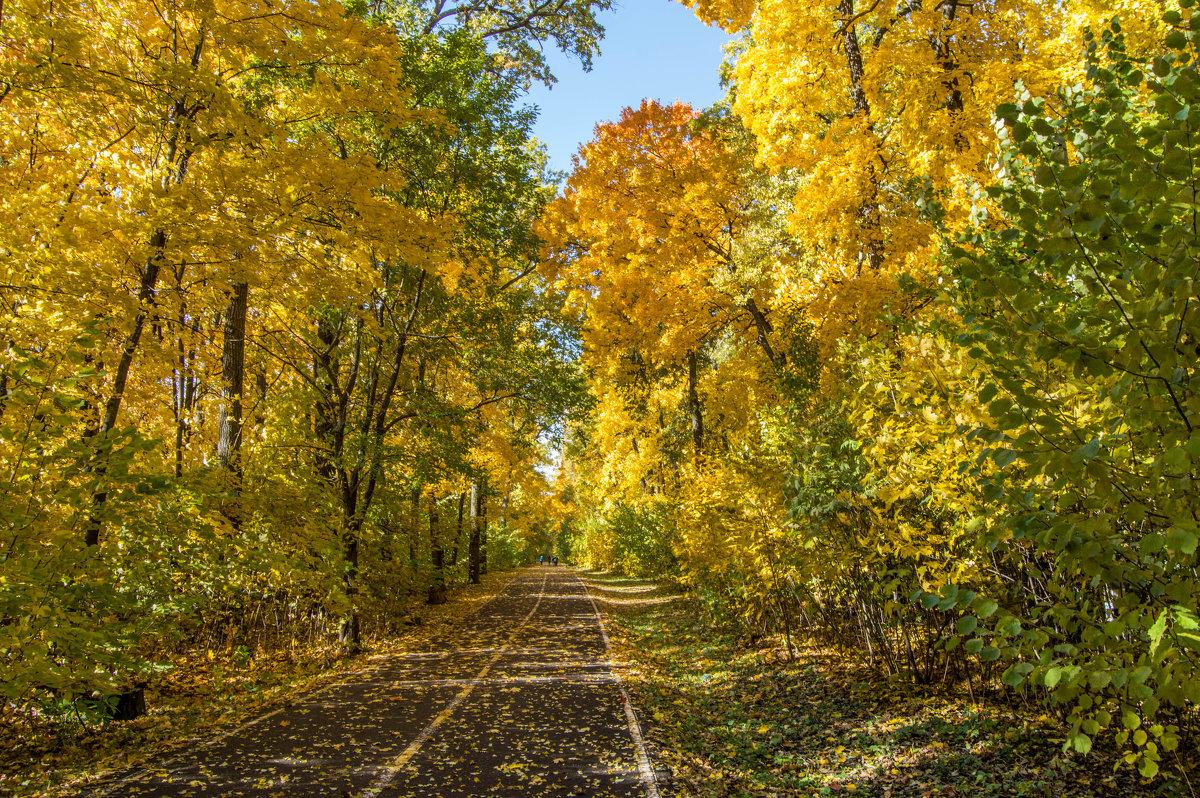 Осень - ирина лузгина