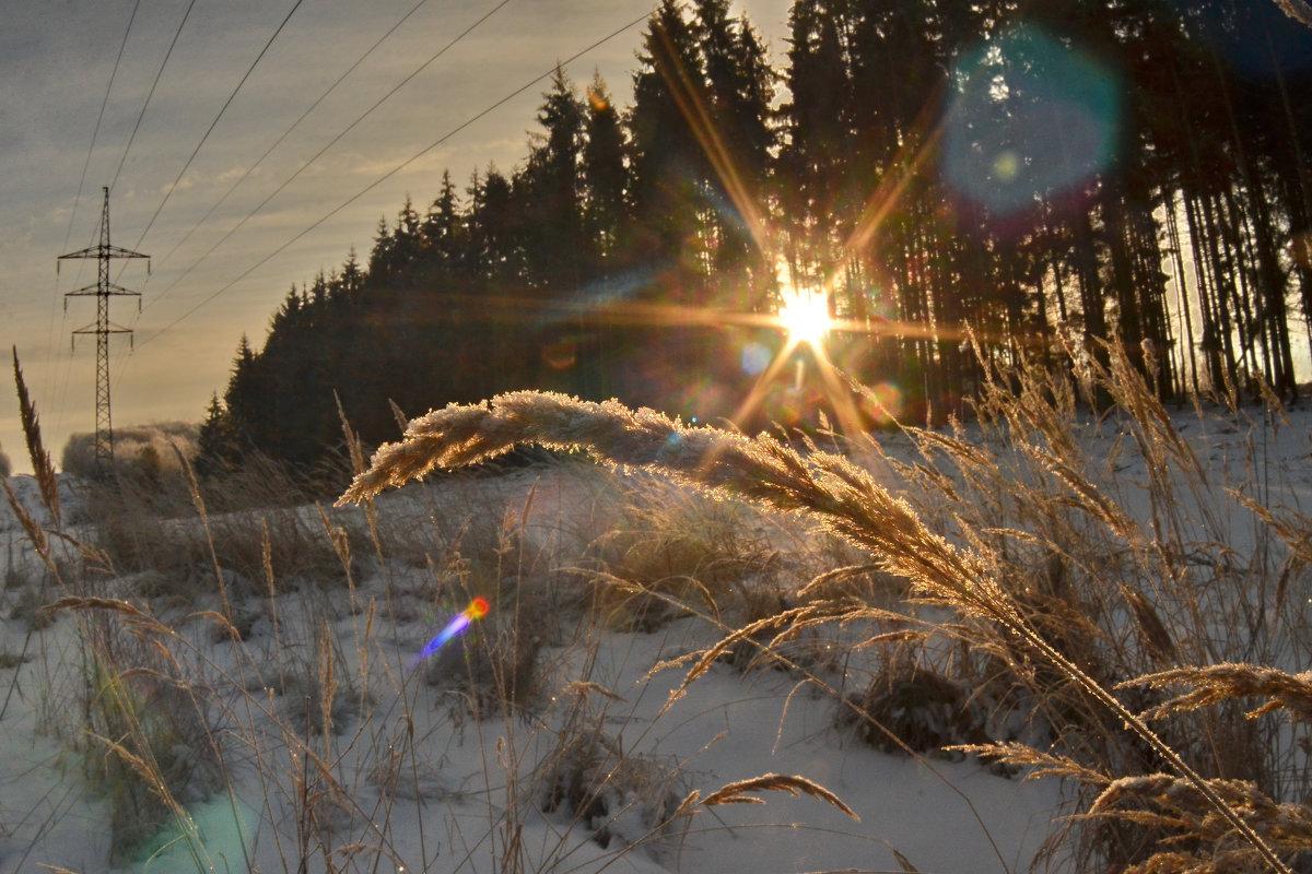 Рассвет  в лесу - Aleksandr Ivanov67 Иванов